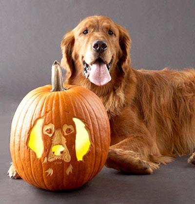 dog-pumpkin-carving