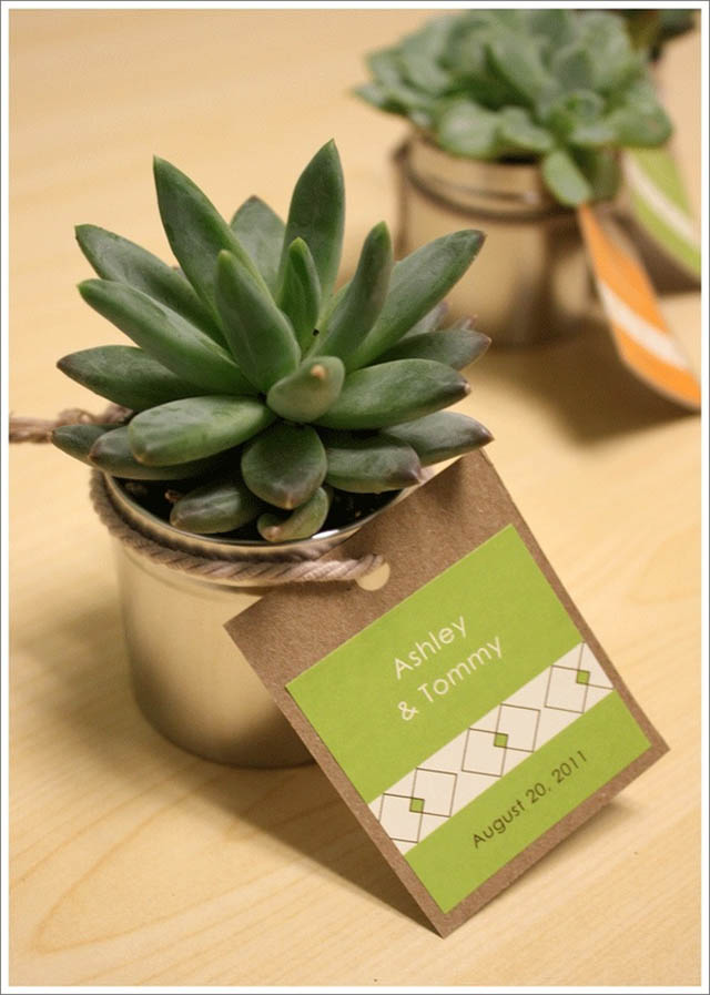 homemade-wedding-favor-ideas-succulent-wedding-favors